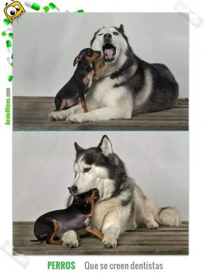 dentista canino