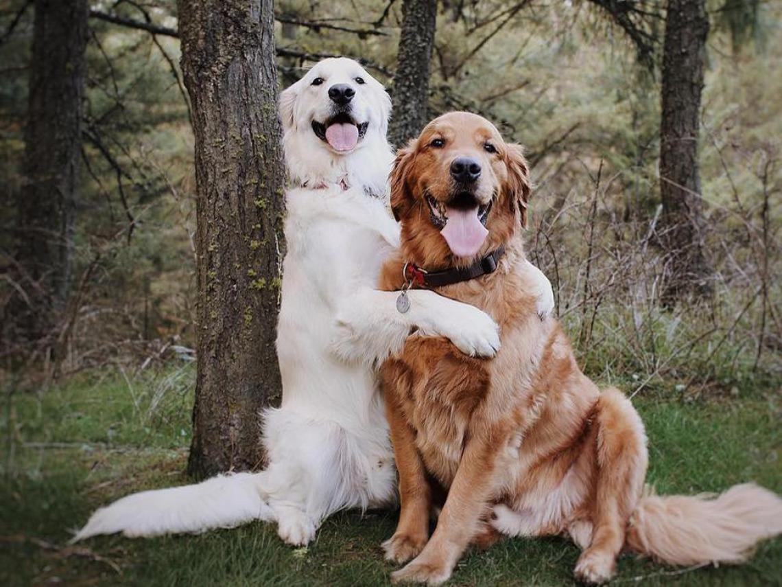 En este momento estás viendo Encantadoras Imágenes de Perros, que Enamoran